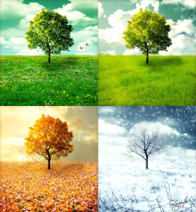 seasons photo